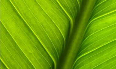 Green Finance Education Charter